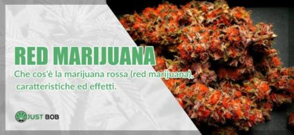 Red marijuana: ecco tutti i dettagli