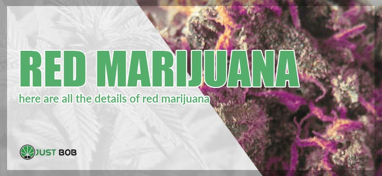 Red marijuana: here are all the details