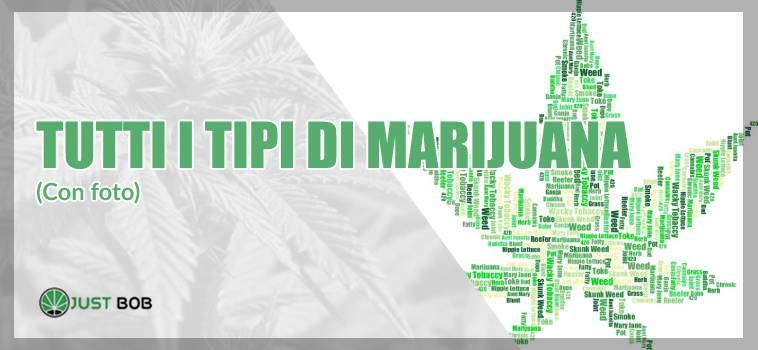 Ecco tutti i tipi di marijuana (incluso il cannabis CBD)