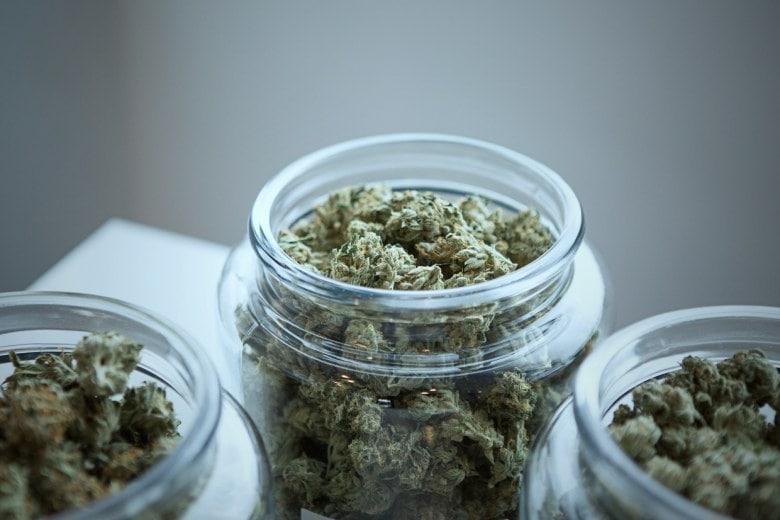 Mango Kush : CBD et THC