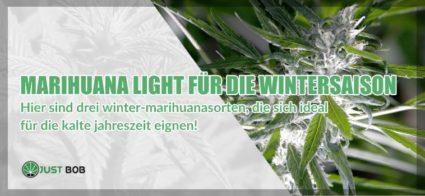 Drei Sorten Marihuana perfekt für den Winter