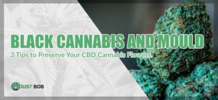 Black Cannabis and Mould