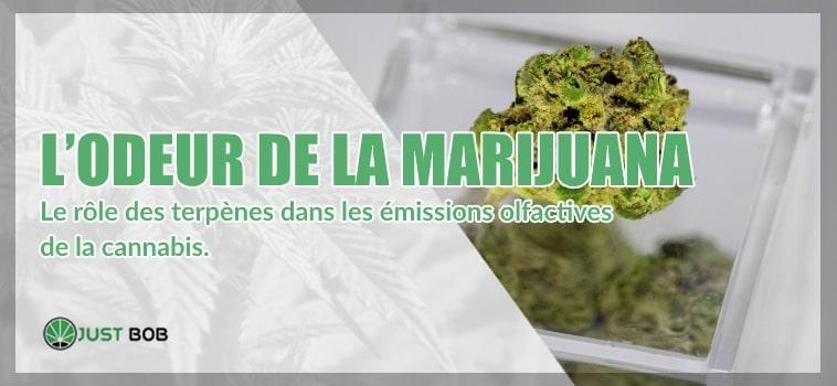 À quoi ressemble l'odeur de la marijuana?