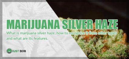 Marijuana Silver Haze