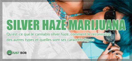Marijuana Silver Haze CBD