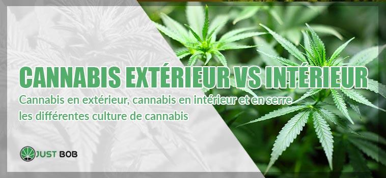 Cannabis en extérieur, intérieur et en serre