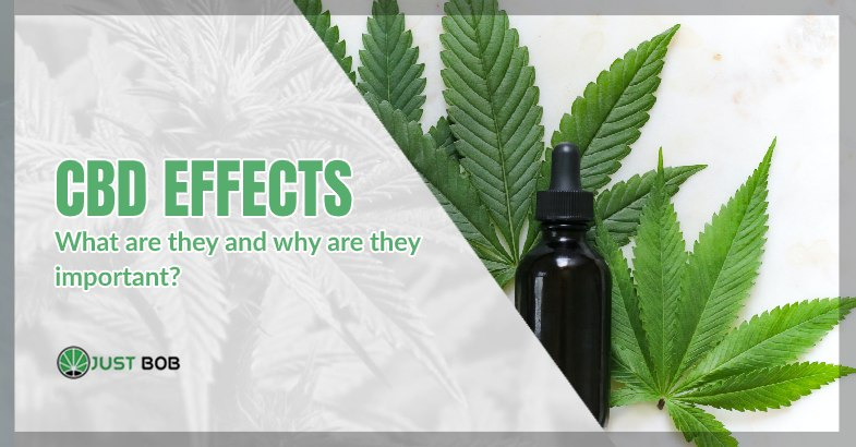 CBD effects: what are they?