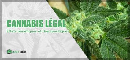 Cannabis: effets bénéfiques et thérapeutiques