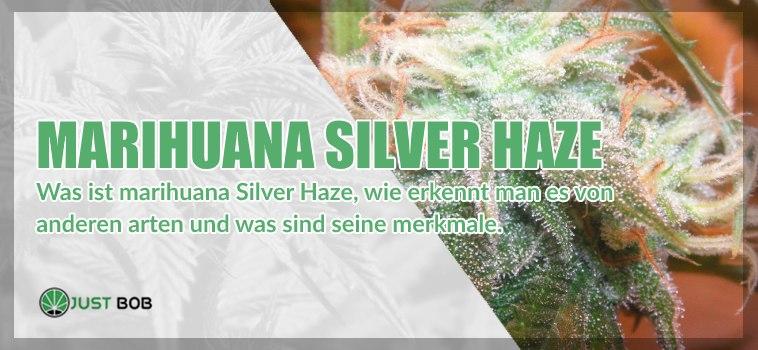 Marihuana Silver Haze