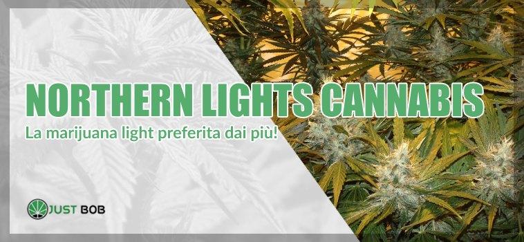 Ecco la cannabis Northern Lights
