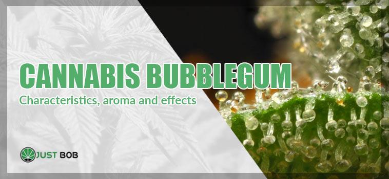 Cannabis bubblegum: characteristics, aroma and effects