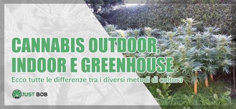Cannabis outdoor, indoor e greenhouse