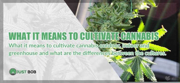 Outdoor, indoor and greenhouse cannabis