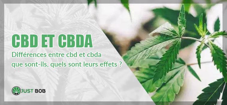 CBD et CBDA: quelles sont les différences?
