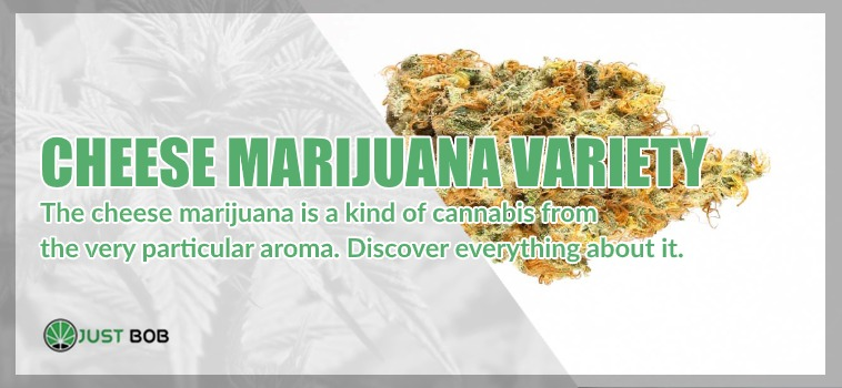 Cheese Marihuana CBD