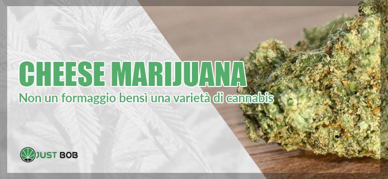 La Cheese Marihuana