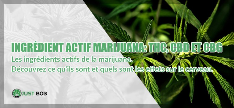 Marijuana: THC, CBD und CBG