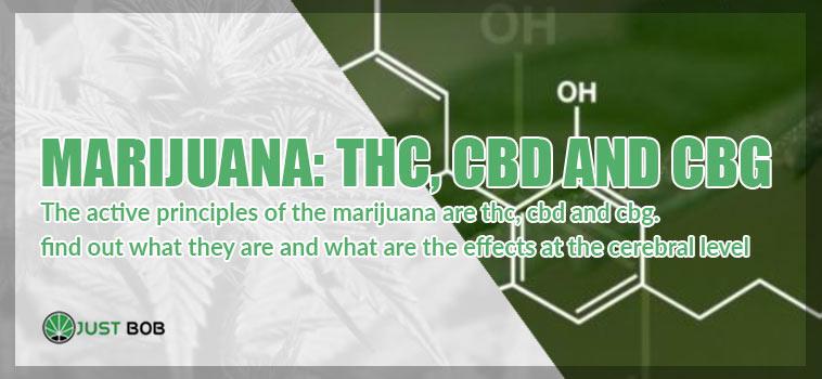 Marihuana: THC, CBD and CBG