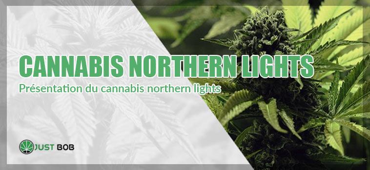 Le Northern Lights Cannabis