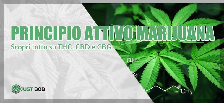 Marihuana: THC, CBD e CBG