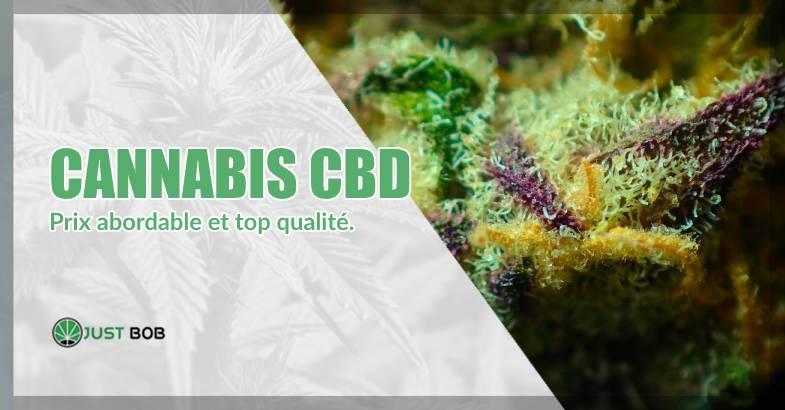 CBD-Cannabis: top qualité