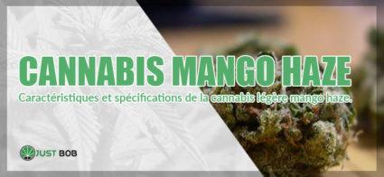 Cannabis Mango Haze cbd
