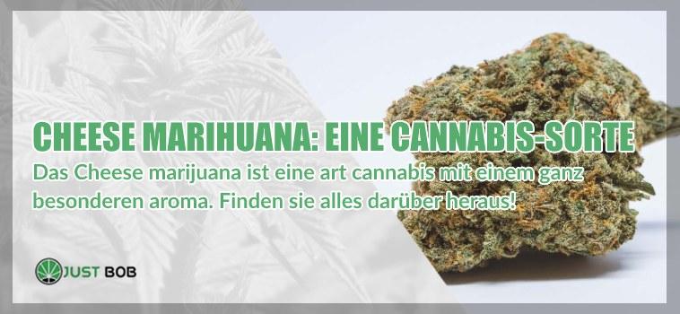 Cheese Marihuana