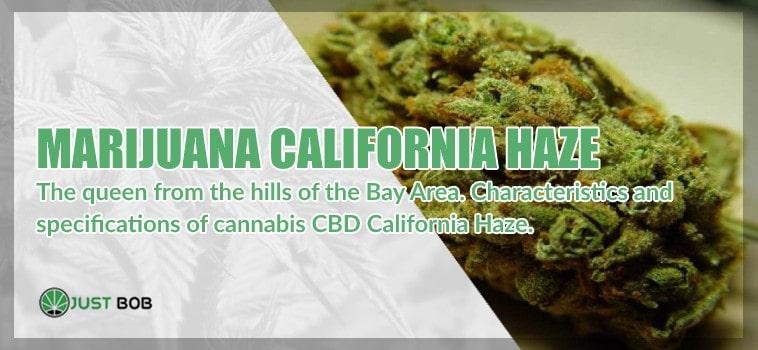 The californiza Haze CBD