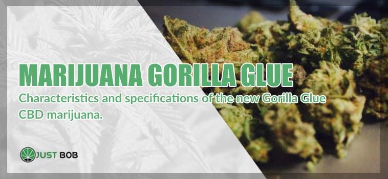 Marijuana Cannabis CBD