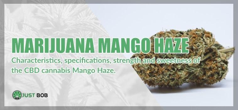 The Marijuana Mango Haze
