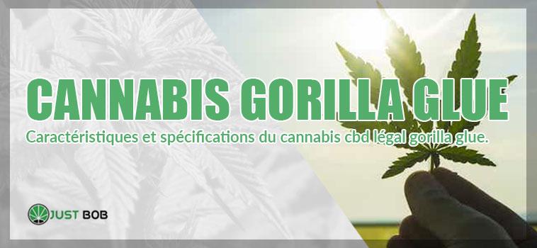 Le cannabis Gorilla Glue CBD