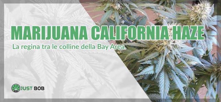 La California Haze CBD