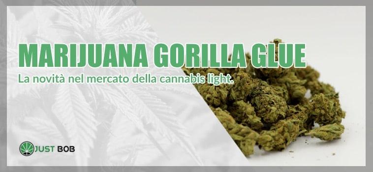 La Marijuana gorilla Glue CBD