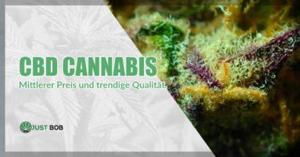 CBD-Cannabis: mittlerer Preis und trendige Qualität
