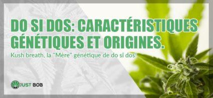 Do Si Dos: genetiques et origines