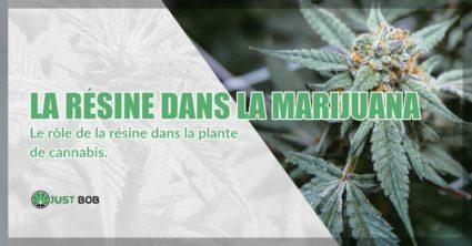 La resine dans la Marijuana