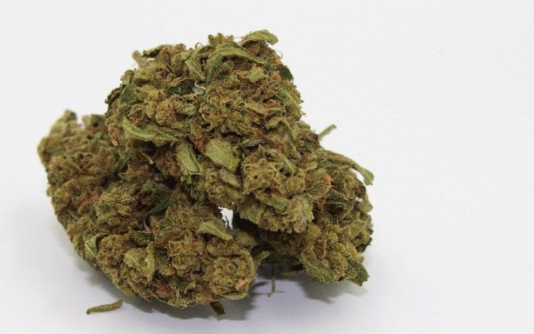 Cannabis légal Gorilla Glue : les caractéristiques
