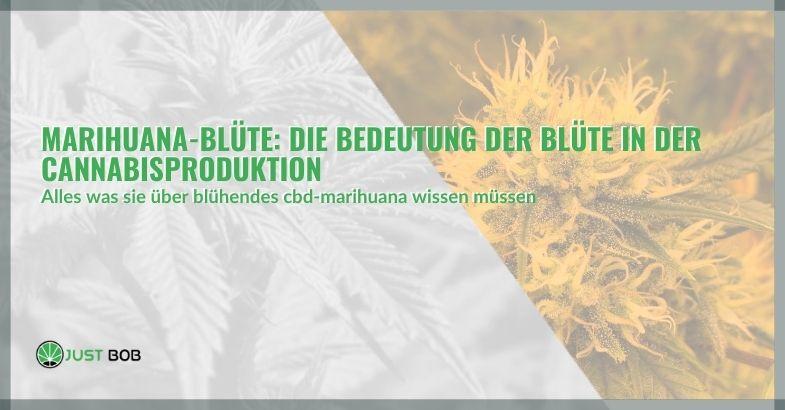 Marihuana-Blüte