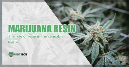 Marijuana and Resin