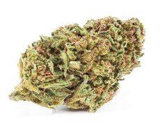 Infiorescenze di marijuana legale California Haze